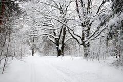 Mooi landschap met eiken en snow-covered weg in de winterbos bij donkere de winterdag Royalty-vrije Stock Afbeelding