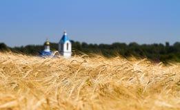 Mooi landschap met geel roggegebied en kerk op achtergrond royalty-vrije stock foto's