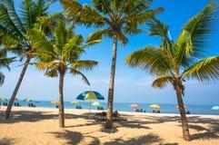 Mooi landschap met grote groene palmen in de voorgrond Royalty-vrije Stock Foto