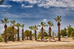 Mooi landschap met palmen en hemel stock foto