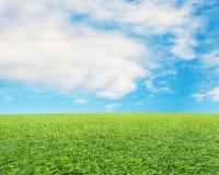 Mooi landschap met verse groene weide, wolk en blauwe hemel Stock Foto's