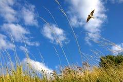 Mooi landschap met vliegende vogel natuurlijke achtergrond stock afbeelding