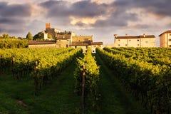Mooi landschap met wijngaarden Stock Afbeeldingen
