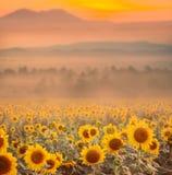 Mooi landschap met zonsondergang en bloemgebied royalty-vrije stock fotografie