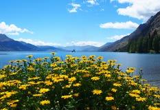 Mooi landschap Nieuw Zeeland Royalty-vrije Stock Foto