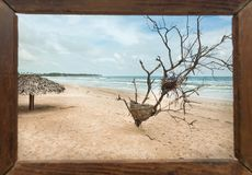 Mooi landschap in photoframe voor geheugen Droge bomen op zonnig strand in tropisch klimaat Oceaangolven bij zonnig weer royalty-vrije stock foto's