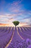 Mooi landschap van bloeiend lavendelgebied stock afbeeldingen