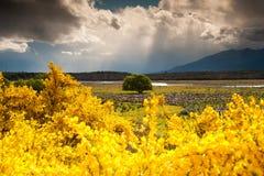 Mooi landschap in bloemtuin, het Eiland van het Zuiden, Nieuw Zeeland Stock Afbeeldingen
