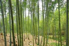 Mooi landschap van het bos van het mosobamboe Royalty-vrije Stock Fotografie