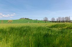Mooi landschap van het idyllische platteland van Toscanië in de lente, met een windende die landweg met cipresbomen wordt gevoerd stock afbeelding