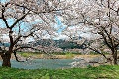 Mooi landschap van idyllisch Japans platteland in de lente stock afbeeldingen