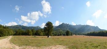 Mooi landschap van Karpatische bergen in Roemenië, panoramamening Stock Foto