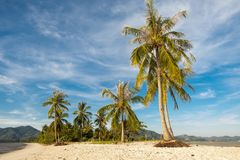 Mooi landschap van kokospalmen op een wit strand in de ochtend en de heldere blauwe hemel stock foto's
