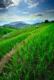 Mooi landschap van rijstterrassen en berg Royalty-vrije Stock Foto's