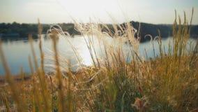 Mooi landschap van rives en het pluimgras stock footage