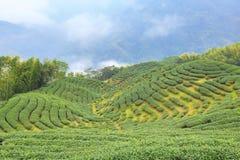 Mooi landschap van theeaanplantingen Royalty-vrije Stock Fotografie