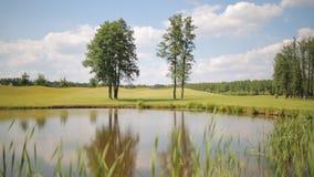 Mooi landschap van vijver op het golfgebied stock video