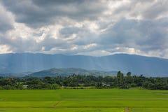 Mooi Landschaps` Padieveld ` in Landelijk Royalty-vrije Stock Foto's