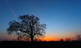 Mooi landschapsbeeld met bomensilhouet Stock Foto