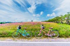 Mooi landschapsbeeld met fietsen op het gebied van de kosmosbloem royalty-vrije stock fotografie