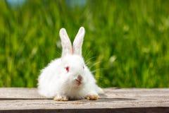 Mooi leuk wit konijn op natuurlijke groene achtergrond stock fotografie