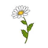 Mooi madeliefje op witte achtergrond vector illustratie