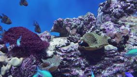 Mooi marien aquarium met de tropische vissen en koralenvideo van de voorraadlengte stock footage
