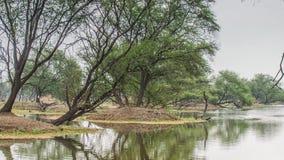 Mooi meer in het Nationale Park van Keolado, India stock video