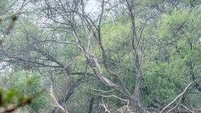 Mooi meer in het Nationale Park van Keolado, India stock footage