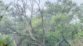 Mooi meer in het Nationale Park van Keolado, India stock videobeelden