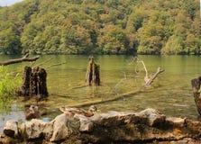 Mooi meer met glashelder water en wilde eenden bij Plitvice-Meren Nationaal Park stock fotografie