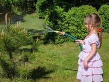 Mooi meisje 5 éénjarigen met lang blond haar in lovelly witte kleding die een kleine pijnboomboom in de tuin water geven stock afbeeldingen