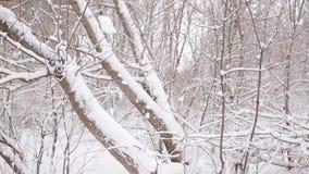 Mooi meisje die een handvol van sneeuw omhoog in de lucht werpen stock footage