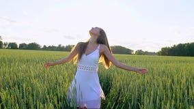 Mooi meisje die hebbend pret op tarwegebied in zonsondergang lopen Vrijheid, gezondheid, gelukconcept Gelukkige jonge vrouw binne stock video