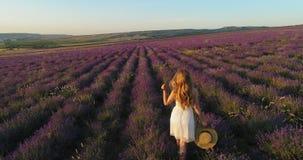 Mooi meisje in een witte kleding met een strohoed in haar handen die op een gebied van lavendel lopen Luchtspruit stock videobeelden