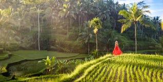 Mooi model in rode kleding bij Tegalalang-Rijstterras 18 royalty-vrije stock foto's