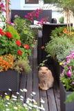 Mooi modern terras met heel wat bloemen Royalty-vrije Stock Fotografie