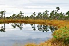 Mooi moeraslandschap royalty-vrije stock afbeeldingen