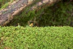 Mooi mosbos van het plateau, Japan Stock Foto's