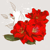 Mooi naadloos bloemenpatroon Stock Foto