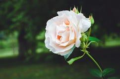 Mooi nam bloei in de tuin toe stock fotografie
