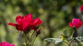 Mooi nam bloem ook in tuin met aardige kleur als achtergrond toe stock foto