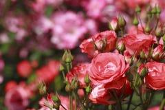 Mooi nam in een tuin toe Stock Foto