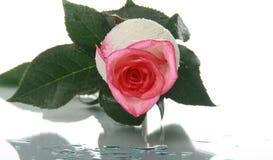 Mooi nam met waterdalingen toe Stock Foto