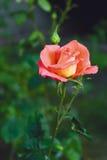 Mooi nam op de tuin toe Stock Foto