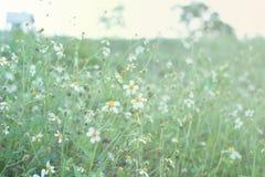 Mooi Natuurlijk Landschap Stock Foto