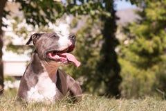 Mooi ogenblik van hond rusten gelukkig bij een park Royalty-vrije Stock Foto