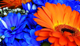 Mooi oranje en blauw bloemenboeket royalty-vrije stock foto's