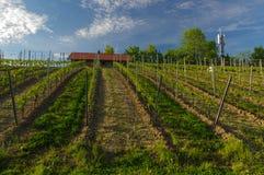 Mooi oud die Wijnhuis met wijngaardheuvels wordt omringd Druivengebieden dichtbij Wuerzburg, Duitsland royalty-vrije stock afbeeldingen