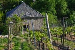 Mooi oud die Wijnhuis met wijngaardheuvels wordt omringd Druivengebieden dichtbij Wuerzburg, Duitsland stock foto's